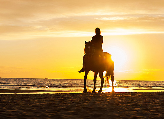 a person horseback riding on the beach at sunset