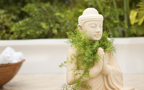 buddha statue with plants growing around the neck